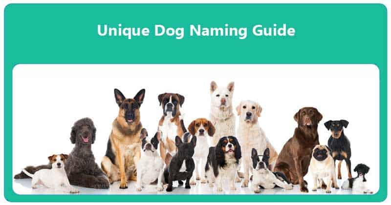 Unique Dog Naming Guide