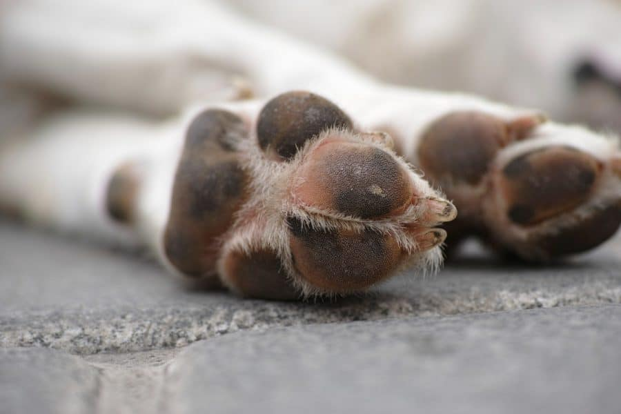 is it safe to use baby wipes on dog's paws