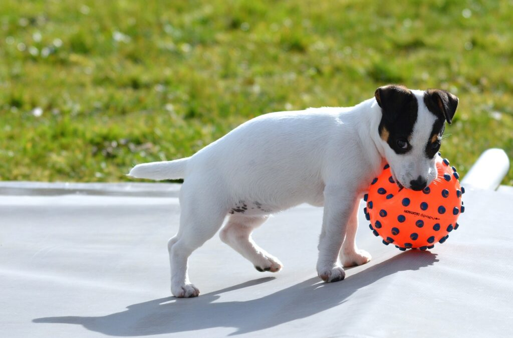 best toys for jack russells