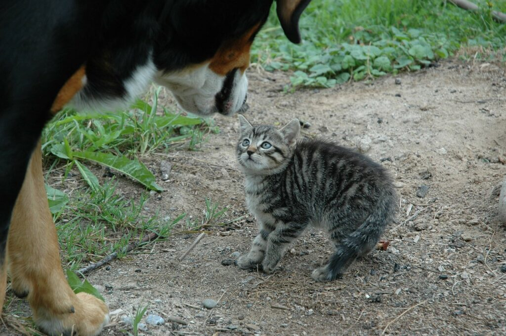 how to tell if a dog is aggressive towards cats