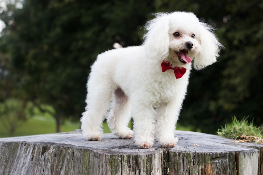 best professional dog clippers for poodles