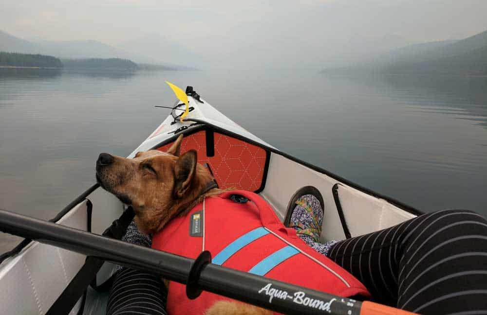 best kayak for large dogs