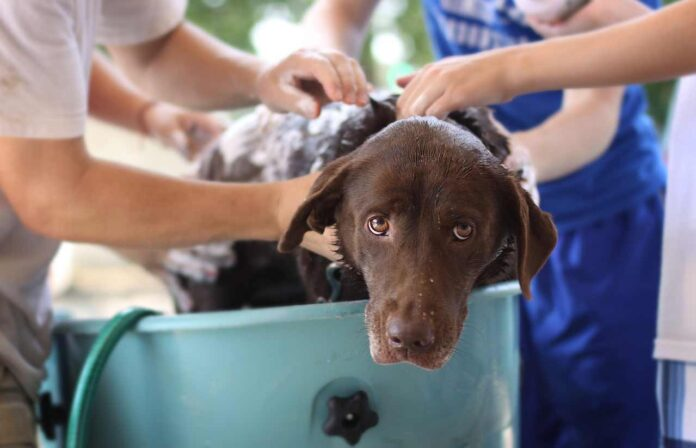 Best Dog Bath Tubs